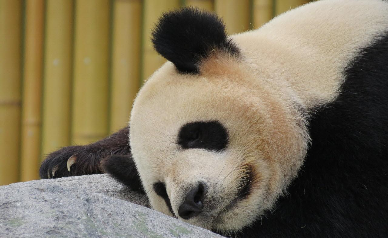 Pandaen aflivede de gammeldags SEO tekster.
